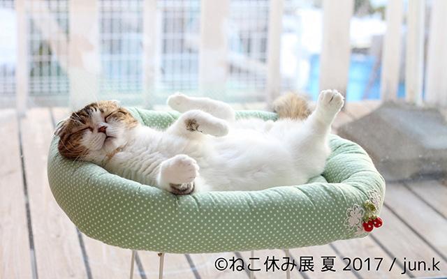 「ダメだ、猫と一緒に休みたい」過去最大規模の『ねこ休み展』開催