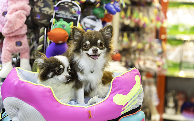 の ペット 売れ残り ショップ たい の 買い 犬 を