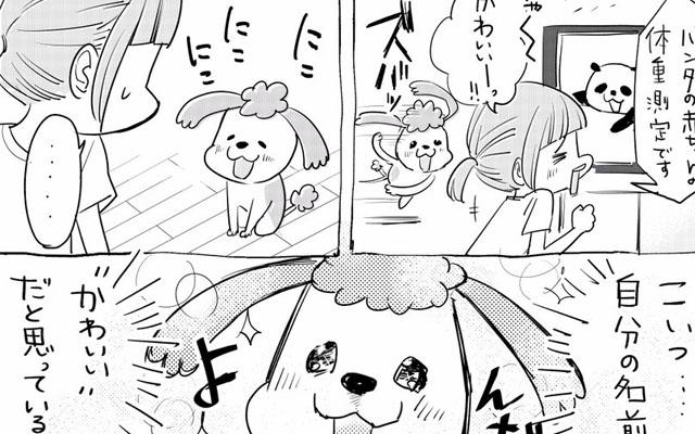 可愛い 名前 犬