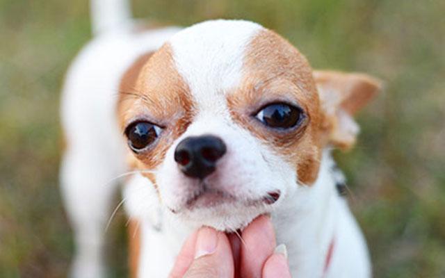 の 種類 犬
