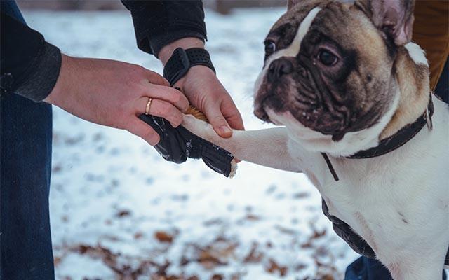 動画 犬 おもしろ