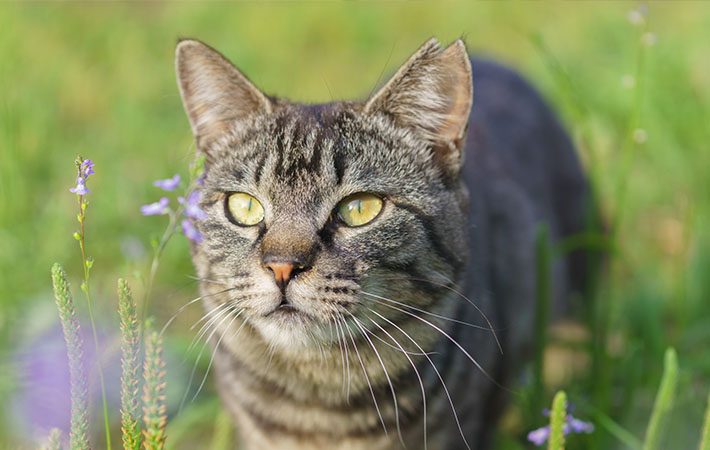 「猫 耳カット」の画像検索結果