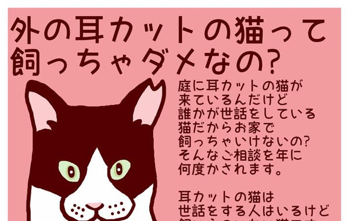 カット 野良猫 耳 【猫】里親・保護猫・迷子猫(保護猫&野良猫)