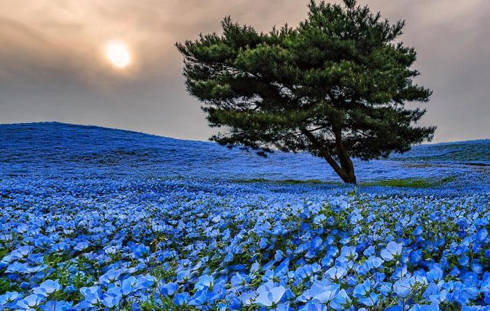外国人が撮影した青い丘の写真 ...