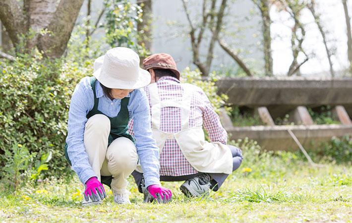 「庭の草抜き」の画像検索結果