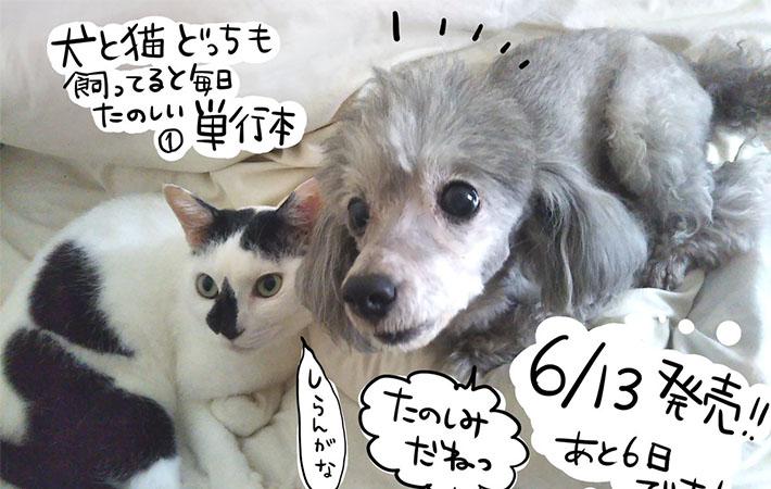 と も どっち 犬 たのしい 猫 毎日 てる 飼っ と