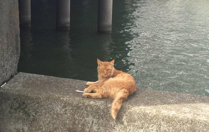 猫 ルアー