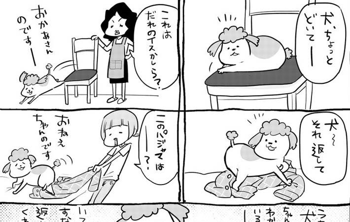 犬と猫どっちも飼ってると 物をもらうと喜ぶ犬 猫は仕事机に遊びに