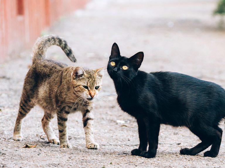 脱走した猫を探していた飼い主 ...