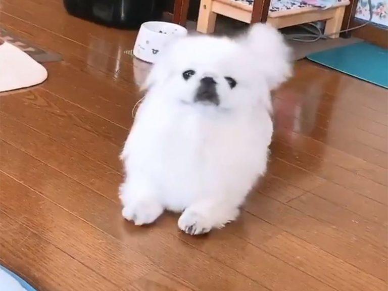 小型犬が『ある動物の赤ちゃん』に変身? シュールな姿にじわる