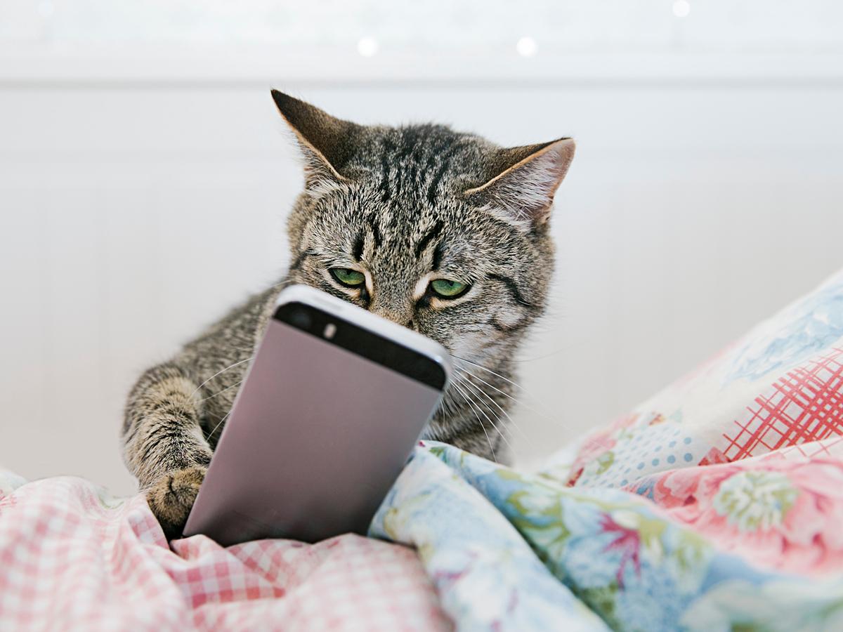 猫 動画 爆笑