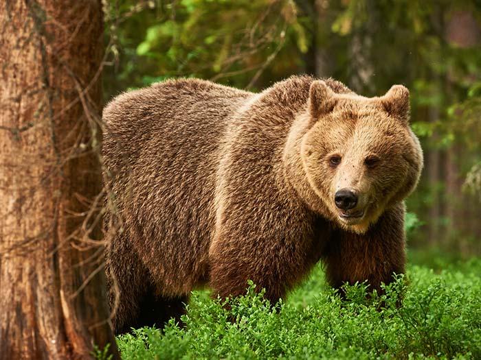 怖い ヒグマ 【奇跡の生還】クマに襲われるハンターの視点映像がマジで怖い