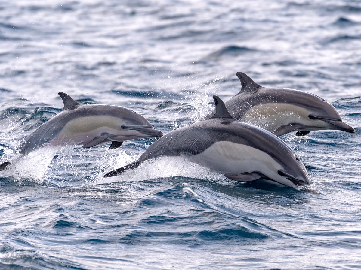 イルカの画像 p1_25