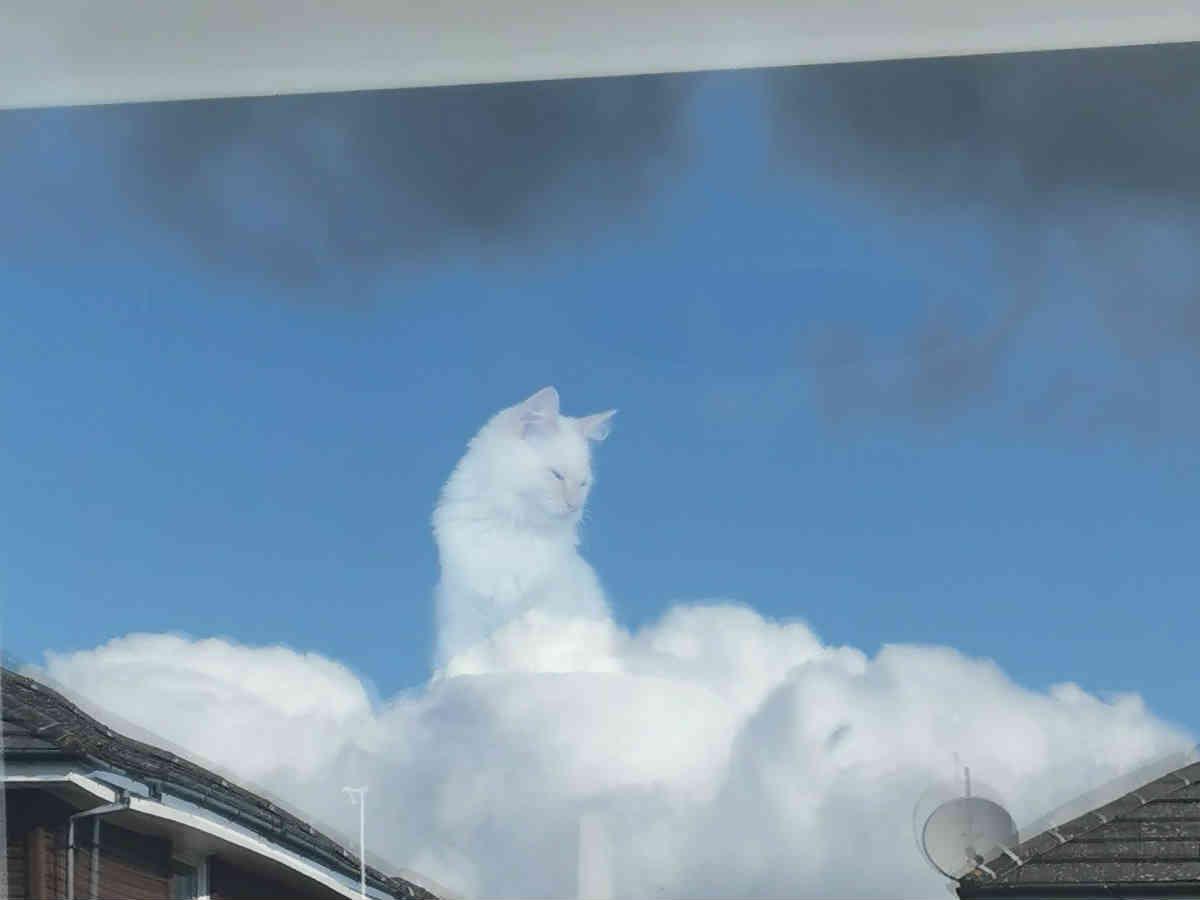 うちの猫が神様になった」 雲の上に座る猫の写真を142万人が絶賛 ...