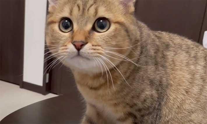 て 猫 くる 見つめ な、なんでしょうか!?猫がじーっと見つめてくる理由