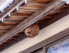スズメバチに巣を作られた! 駆除のポイントや、応急処置の方法は?