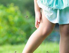 蚊の対策間違えてない? 網戸の使い方で家の中にも… 庭や屋外でも役立つ方法