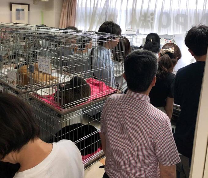 愛猫 ネコ ねこ 猫 保護 NPO法人 ねこけん 譲渡会 新しい 家族