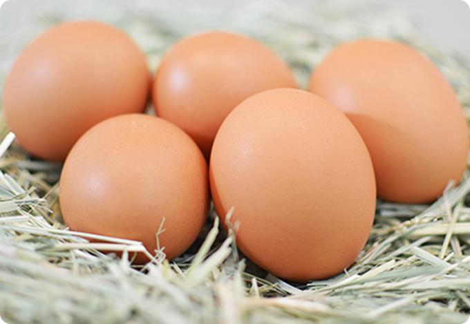 鶏卵 生産 九十九里ファーム たまご