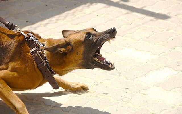 愛犬が落ち着かない原因は飼い主?ワンコの『共感能力』を知ってあげて