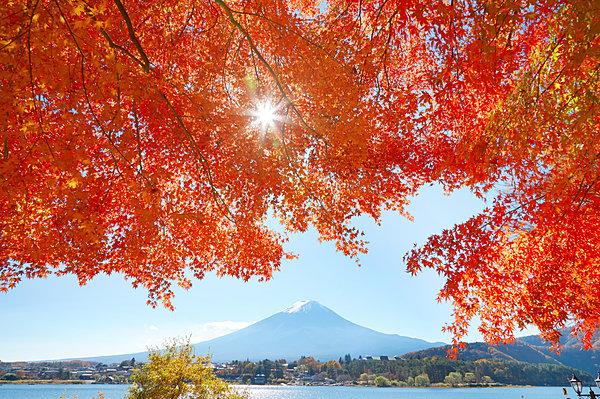 秋の楽しみといえば紅葉。紅葉について知って、もっと紅葉狩りを楽しみましょう