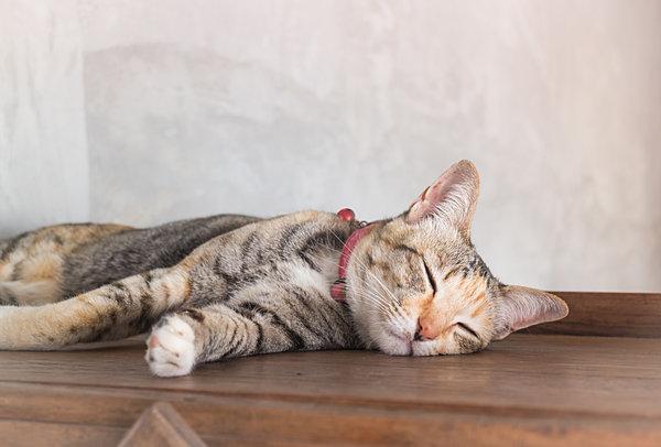 春でも猫は気持ちよく過ごしたいことでしょう