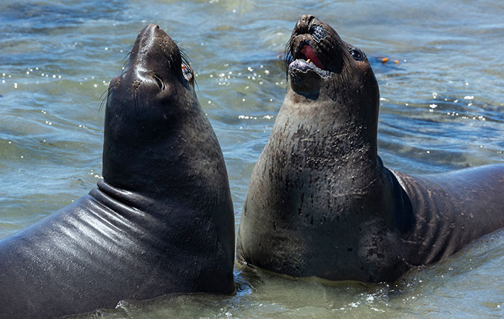アザラシ 潜水 ゾウ