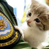 イケメン大尉が子猫を保護 「どっちを見たらいいの?」女性たちから悲鳴