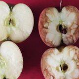 リンゴを罵倒してイジメ教育 ユニークな手法に「自分も習いたかった」と絶賛の声