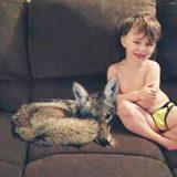 妻「捨て犬を飼いたいの」 息子の横にいるの、どう見てもコヨーテ!