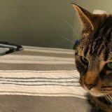 猫「これじゃない…」 通販で購入したキャットタワーに猫が激オコ