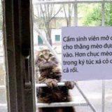 「このネコを室内に入れないで」 理由を知って、言葉を失った